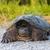 sluiten · zee · schildpad · vrouw · Blauw · masker - stockfoto © pazham