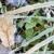морозный · лист · утра · мороз · завода · листьев - Сток-фото © pedrosala