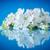 sidra · manzana · flores · flor · frutas · árboles - foto stock © peredniankina