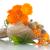 aszalt · virágok · narancs · virág · természet · egészség - stock fotó © peredniankina