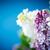 orgona · szöveg · terv · virágok · fa · deszka · fehér - stock fotó © peredniankina