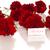 köszönjük · kártya · hála · virágok · fehér · virág - stock fotó © Peredniankina