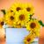 primer · plano · hermosa · amarillo · crisantemo · flores · jardín - foto stock © peredniankina