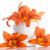 oranje · lelie · mooie · witte · bloem · tuin - stockfoto © Peredniankina