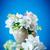 ユリ · 谷 · 木製 · テクスチャ · 春 - ストックフォト © peredniankina