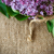 blooming lilac stock photo © peredniankina