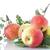 casero · manzanas · jardín · orgánico · diseno · frutas - foto stock © peredniankina