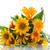 tournesols · fleurs · isolé · blanche · soleil · nature - photo stock © peredniankina