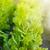 crescente · alface · jardim · chuva · legumes · frescos · primavera - foto stock © peredniankina