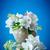 Geschenkkarte · Apfel · Blüte · Blumen · Vase · Blatt - stock foto © peredniankina