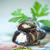 plantaardige · aubergine · foto's · zomer · plaat - stockfoto © peredniankina