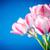 ramo · temprano · flores · de · primavera · blanco · flores · cumpleanos - foto stock © peredniankina