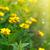 ひまわり · 花束 · ヒマワリ · 花 · 黄色 · 太陽 - ストックフォト © peredniankina