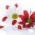 rojo · blanco · crisantemo · flores · belleza · verano - foto stock © Peredniankina