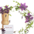 beautiful blooming clematis stock photo © peredniankina