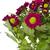 rojo · blanco · primavera · belleza · otono · regalo - foto stock © peredniankina