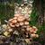 grupy · grzyby · drzewo · mech · pozostawia · rodziny - zdjęcia stock © peredniankina