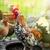 psychedelic · gekleurd · stralen · partij · abstract · ontwerp - stockfoto © peredniankina