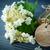 floraison · Lily · vallée · herbe · feuille · fond - photo stock © peredniankina