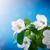virágzó · gyümölcsfa · tavasz · virágok · kék · ég · égbolt - stock fotó © peredniankina