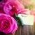 庭園 · ピンク · バラ · 花束 · 木製のテーブル · 先頭 - ストックフォト © peredniankina