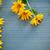 黄色 · デイジーチェーン · 花 · 白 · 春 - ストックフォト © peredniankina