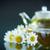 ромашка · чай · цветы · свежие · оладья · свечу - Сток-фото © peredniankina