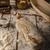 eigengemaakt · rustiek · brood · gebakken · oven · tarwe - stockfoto © peteer