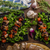 disznóhús · nyárs · zöldségek · fokhagyma · koktélparadicsom · étel - stock fotó © peteer