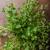 bio · gyógynövények · étel · fotózás · tavasz · levél - stock fotó © peteer