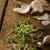 domestique · bio · ail · tchèque · épices · fraîches - photo stock © Peteer