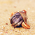 deniz · kabuk · yengeç · plaj · sabah · ada - stok fotoğraf © petrmalyshev