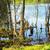 болото · лес - Сток-фото © petrmalyshev