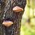 ツリー · 菌 · 森林 · 緑 · 背景 - ストックフォト © petrmalyshev