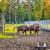 ヨーロッパの · バイソン · 食べ · 頭 · 動物 - ストックフォト © petrmalyshev
