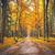 autumn alley stock photo © petrmalyshev