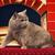 enojado · rojo · gato · 3d - foto stock © petrmalyshev