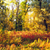 autumn mixed forest stock photo © petrmalyshev