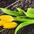 laisse · peint · jardin · wallpaper · usine - photo stock © petrmalyshev