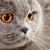 feminino · gato · isolado · cinza · médico - foto stock © petrmalyshev