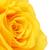 Geel · steeg · bloem · textuur · achtergrond - stockfoto © petrmalyshev