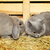 cat and rabbit stock photo © petrmalyshev