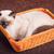 тайский · котенка · корзины · красивой · серый - Сток-фото © PetrMalyshev