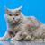 cute · gatito · enojado · gato - foto stock © petrmalyshev