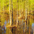 flooded forest at spring stock photo © petrmalyshev