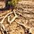 természetes · mocsár · Thaiföld · tájkép · háttér · fák - stock fotó © petrmalyshev