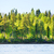 forest on rivershore stock photo © petrmalyshev