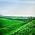 summer landscape stock photo © petrmalyshev