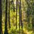 outono · floresta · chuva · gotas · verde · magia - foto stock © petrmalyshev