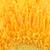 amarelo · flor · pétalas · belo · isolado · branco - foto stock © petrmalyshev